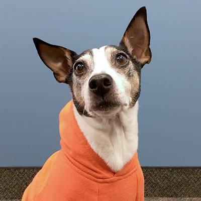 Our company mascot, Super Cooper.